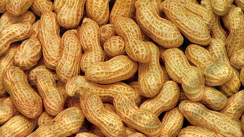 Groundnut.jpg